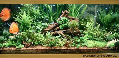 aquafish journal de l 39 installation d 39 un aquarium par greg. Black Bedroom Furniture Sets. Home Design Ideas